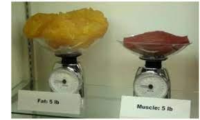 bilancia massa grassa e magra